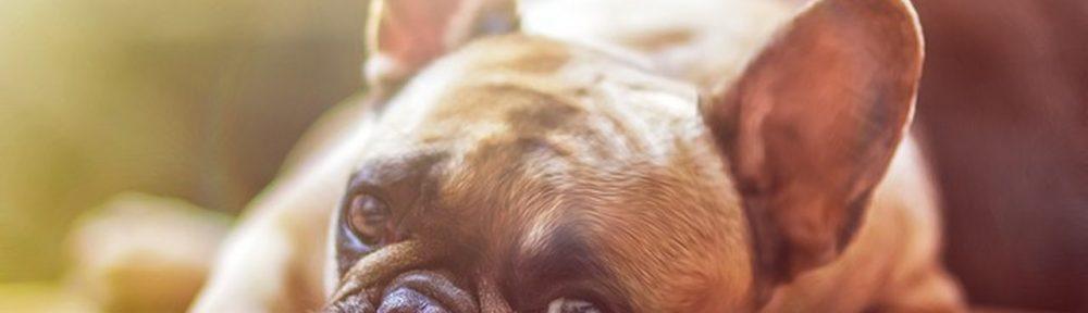 Nomes para cachorros - Veja 10 Nomes criativos para seu cachorro